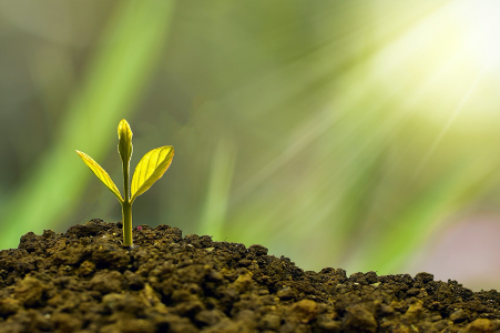 Business Growth Seeds Growing